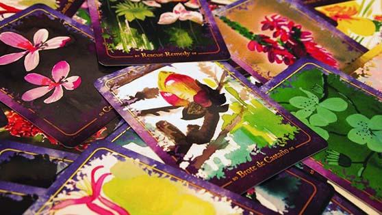 flores-de-back-manual-cartas-florales-maranda